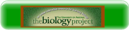 https://sites.google.com/a/apps.sparcc.org/resources/lsne/the-asu-biology-project.png